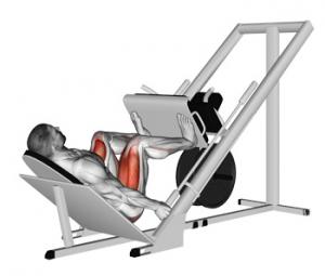 Squat and Leg Press to improve golf swing